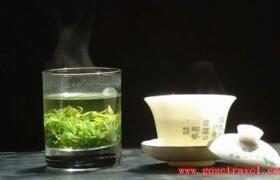 青城苦丁茶
