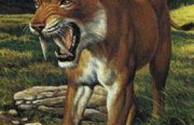 老虎[食肉動物]